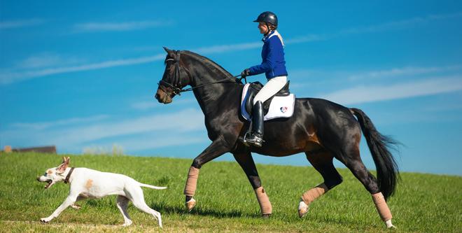 Konditionstraining für Dressurpferde