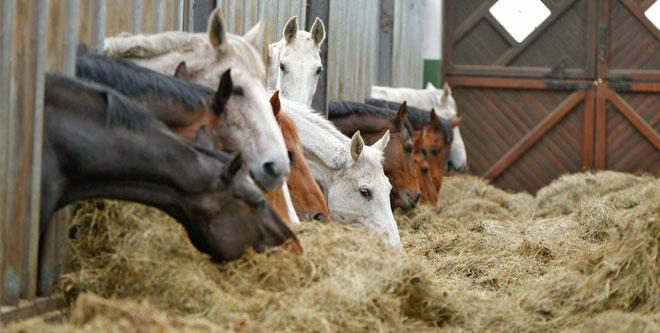 Neue Serie: Die gesunde Pferdehaltung