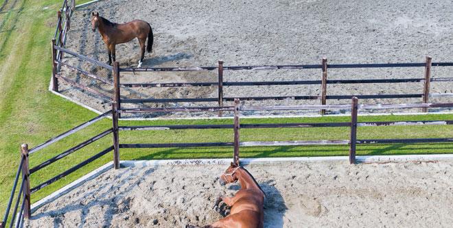 Pferdehaltung: Kleine Freiheit auf Paddocks
