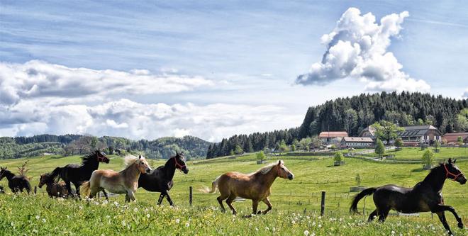 Gut Aiderbichl: Europas größter Gnadenhof