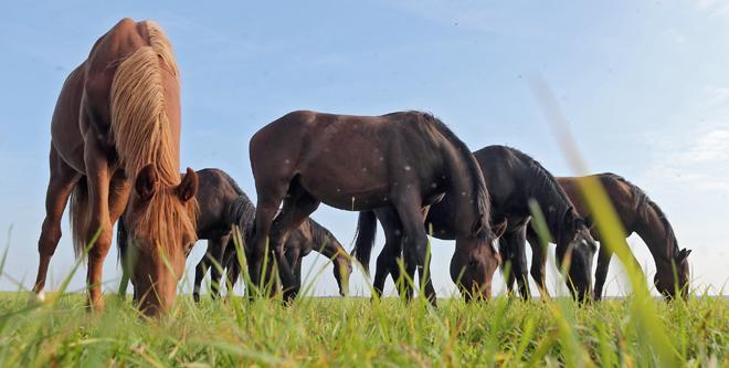 Pferdehaltung: Richtig anweiden