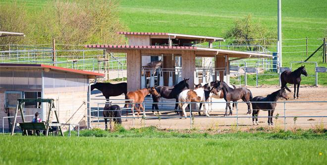 Pferdehaltung: Das Leben in der Gruppe