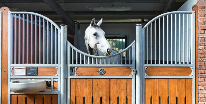 Pferdehaltung: Die Einzelbox – einzeln, aber nicht allein