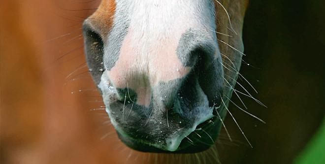 Herpes-Ausbruch: Reiter sind schockiert