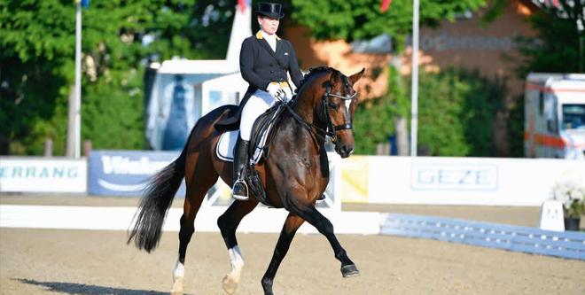 PferdePromi: Isabell Werths Hengst Quantaz