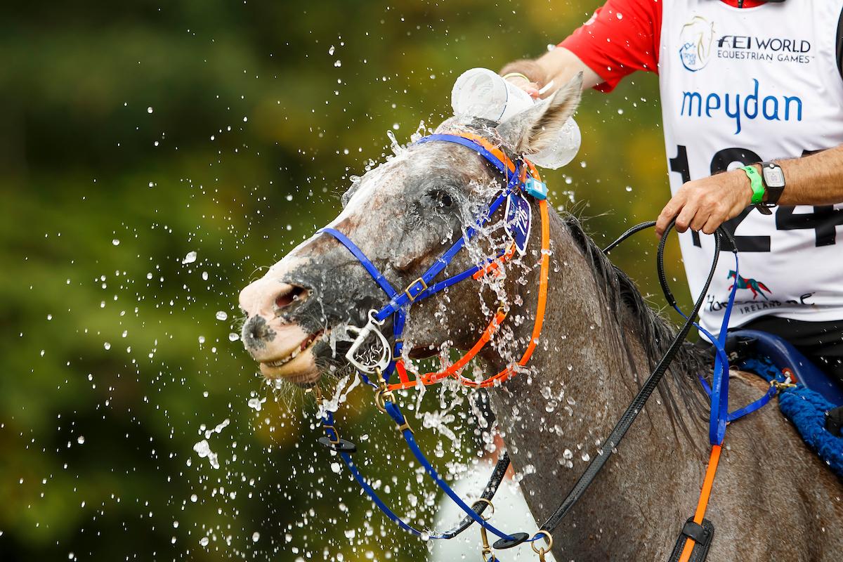 FEI sanktioniert Distanzreiter wegen Pferdemisshandlung