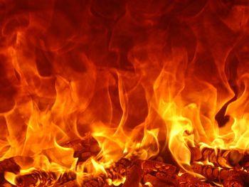 Ostholt-Pferde sterben im brennenden LKW